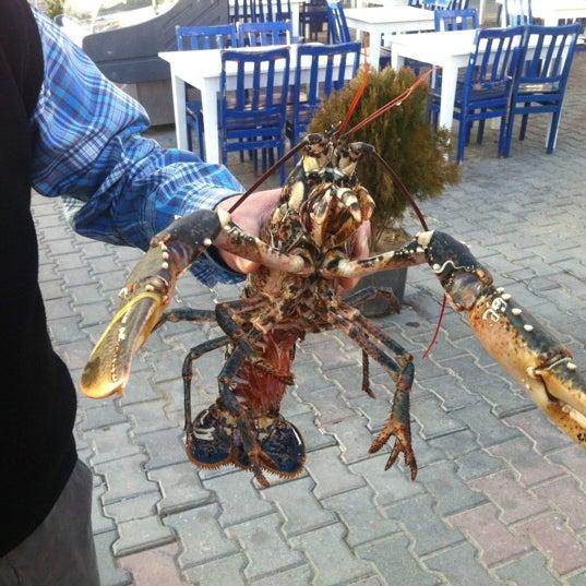 11/25/2012 tarihinde ♕ Ƙɑɾɑղƒi̇Ӏziyaretçi tarafından Cunda Deniz Restaurant'de çekilen fotoğraf