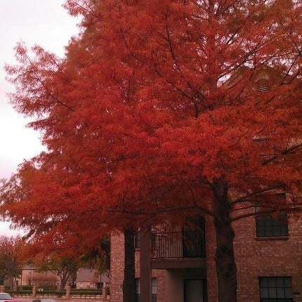 Photo taken at The University of Texas at Dallas (UTD) by Animesh P. on 12/10/2012