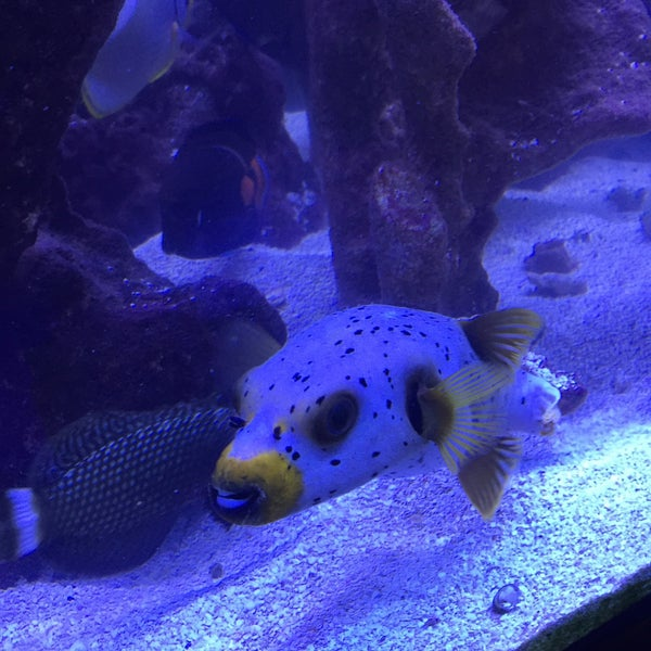 Austin aqua dome south lamar austin tx for Fish store austin