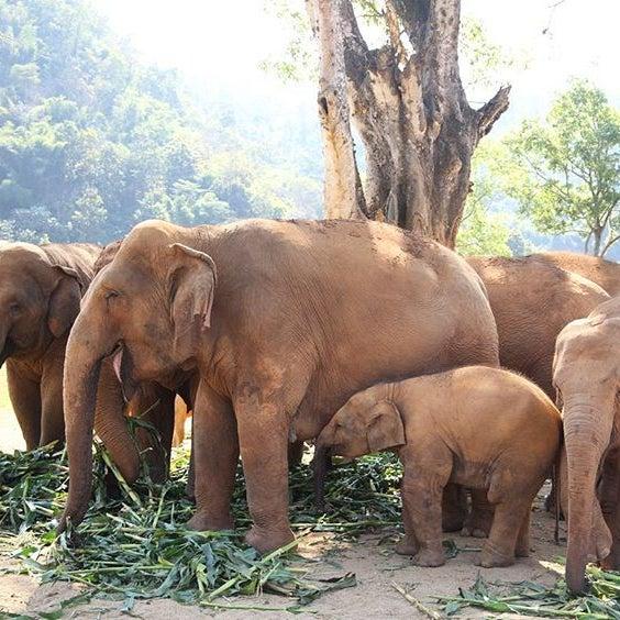 Elephant Nature Park - เมืองเชียงใหม่, เชียงใหม่