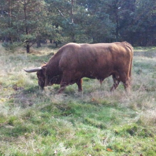 Photo taken at Nationaal Park De Hoge Veluwe by Nancy &. on 10/7/2012