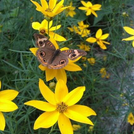 Photo taken at Hershey Gardens by Kirstin S. on 7/11/2012