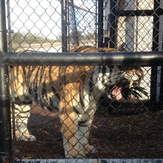 Photo taken at LSU - Mike's Habitat by Corinne P. on 10/17/2012