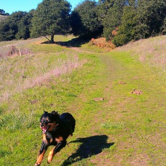 Wildcat Regional Park Dog
