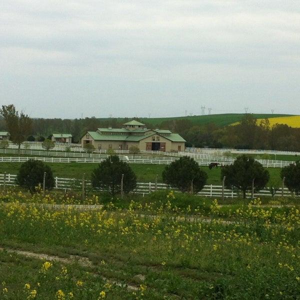 4/22/2013 tarihinde zulal t.ziyaretçi tarafından Olimpos At Çiftliği'de çekilen fotoğraf