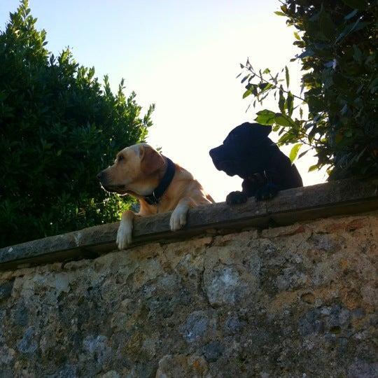 รูปภาพถ่ายที่ Giglio Rosso โดย Zach S. เมื่อ 10/16/2012