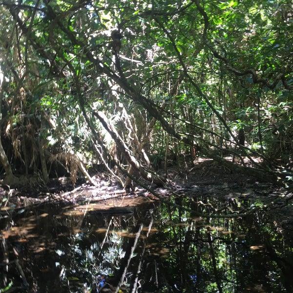 Fitzroy Island Queensland: Fitzroy Island, QLD
