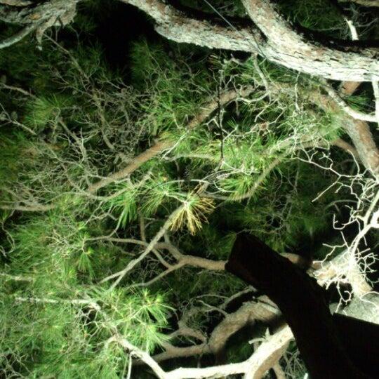 Под деревом скрывается вайфай) Не уйду!