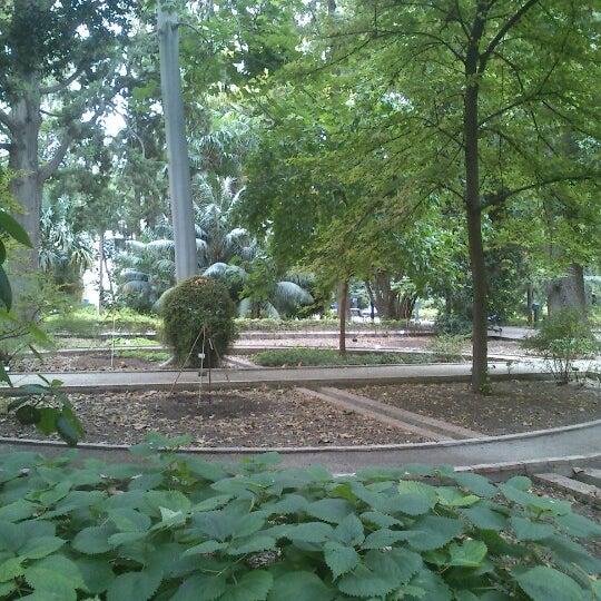 Jard n bot nico botanical garden in valencia - Jardin botanico valencia ...