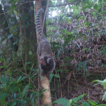 Photo taken at Parque Estadual do Jaraguá by Douglas P. on 2/18/2013