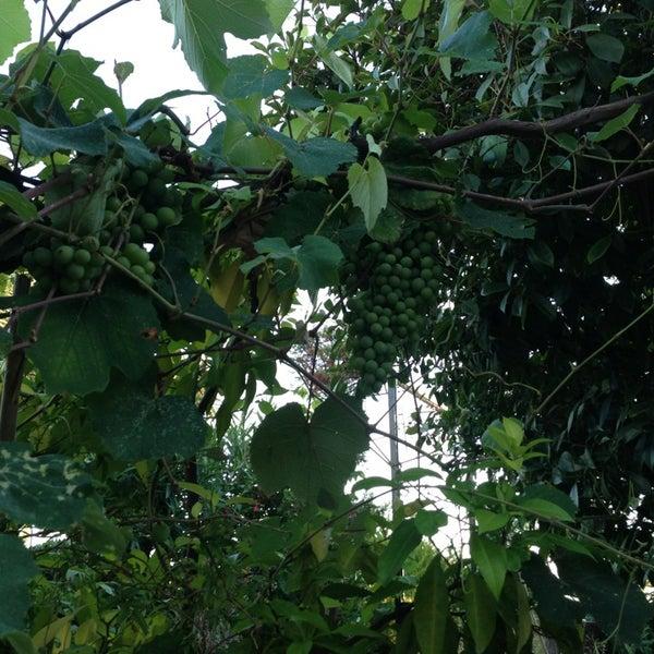 7/22/2013 tarihinde damlaziyaretçi tarafından Maria'nın Bahçesi'de çekilen fotoğraf