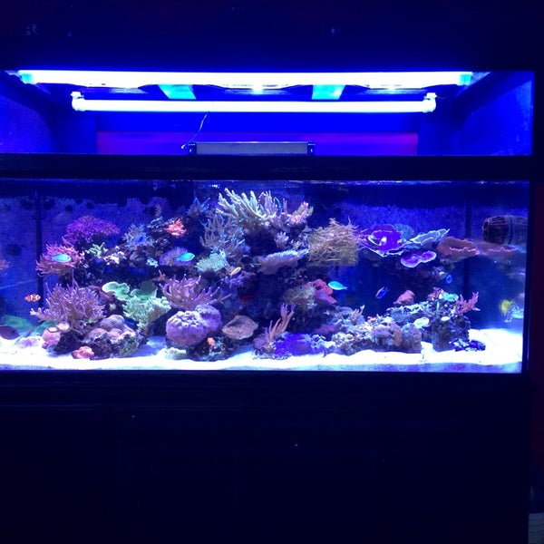 T t fish reef pet store for 1 fish 2 fish store