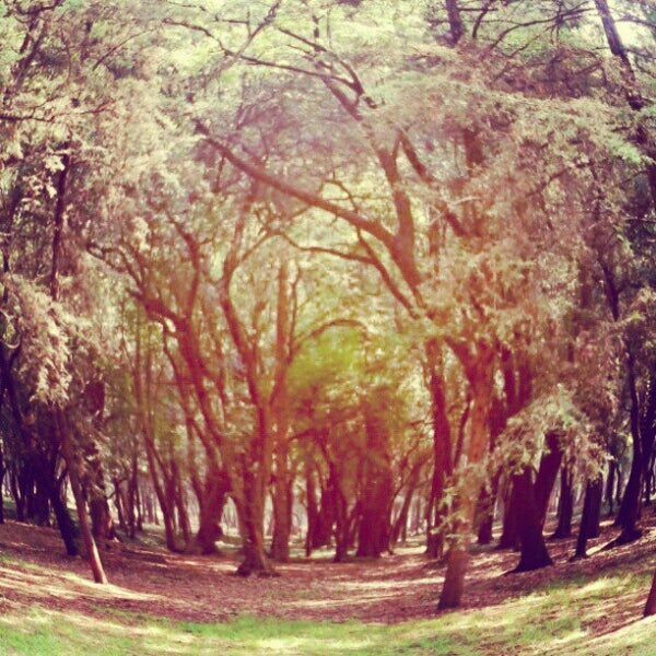 Photo taken at Bosque de Chapultepec by patriciaph on 5/15/2013