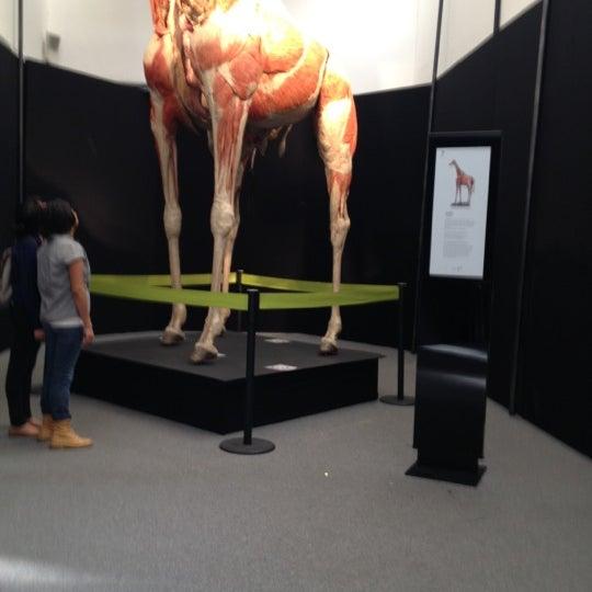 Foto tomada en Universum, Museo de las Ciencias por Fernando P. el 10/7/2012