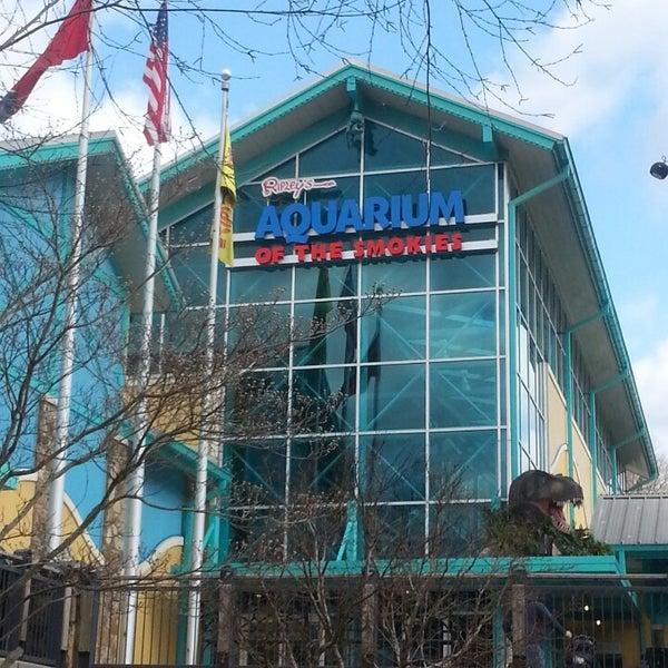 Ripley 39 S Aquarium Of The Smokies Aquarium