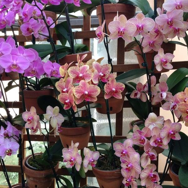 Photo taken at Atlanta Botanical Garden by Melanie A. on 3/9/2013