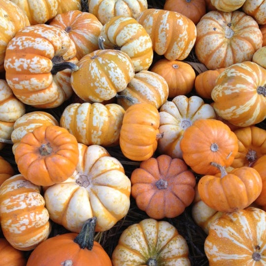 Photo taken at Clancy's Pumpkin Patch by Amanda A. on 10/21/2012