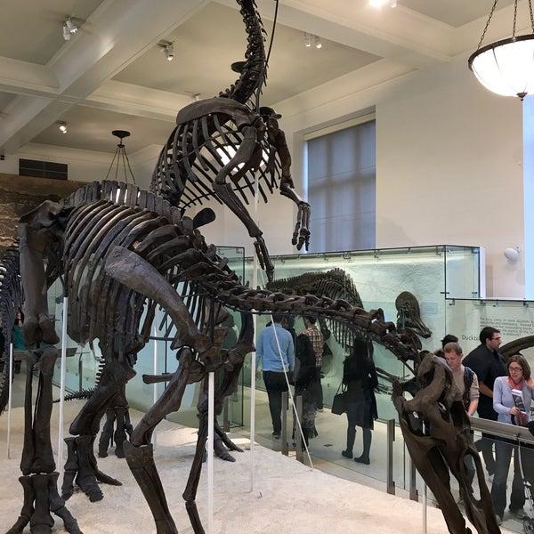 Photo taken at David H. Koch Dinosaur Wing by Marian B. on 4/22/2017