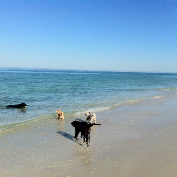 Photo Taken At Hillarys Dog Beach By Michelle S On
