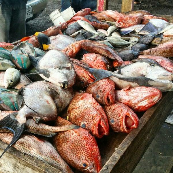 Public market fish market for Best fish market nyc