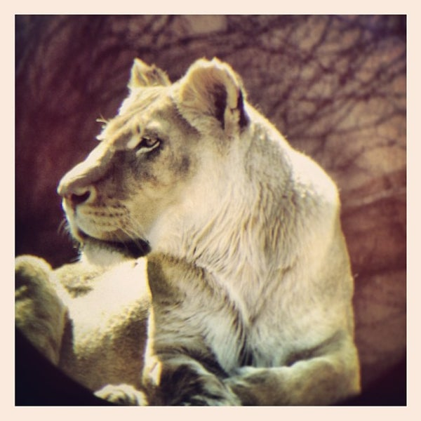 Photo taken at Lincoln Park Zoo by Greg F. on 4/4/2013