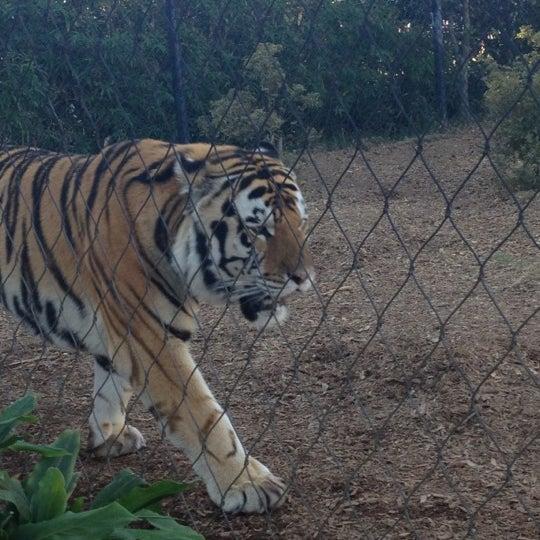 Photo taken at LSU - Mike's Habitat by Caroline T. on 11/14/2012