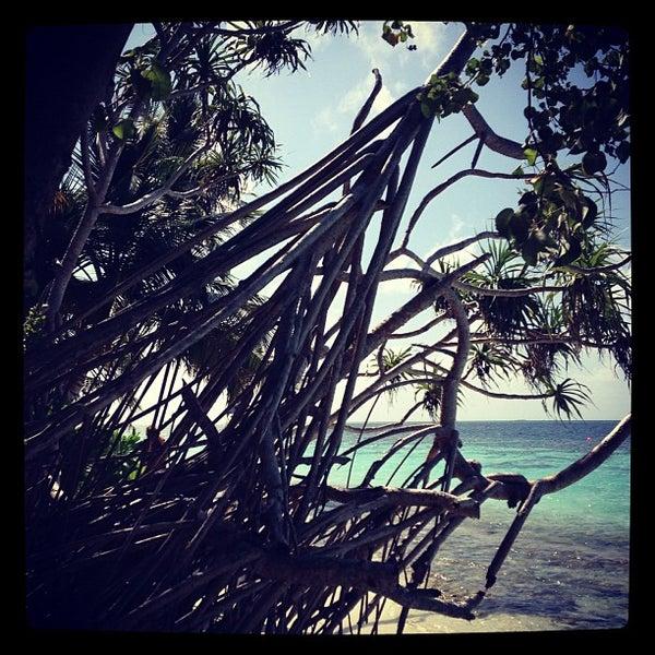 Photo taken at Vilamendhoo Island Resort & Spa by Denis L. on 9/28/2012