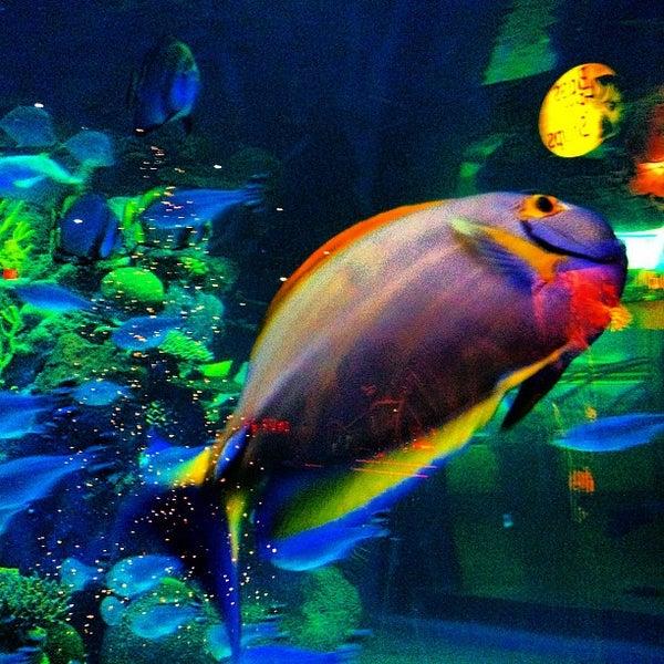 Silverton aquarium 8 tips for Tropical fish las vegas