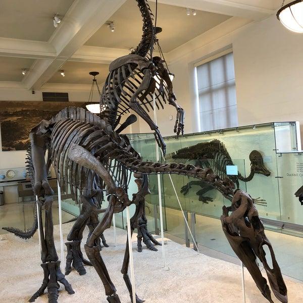 Photo taken at David H. Koch Dinosaur Wing by Sadat S. on 12/11/2017