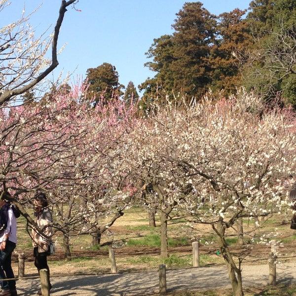 Photo taken at 偕楽橋 by Taka I. on 3/16/2013