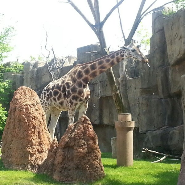 Photo taken at Lincoln Park Zoo by Kris P. on 5/18/2013