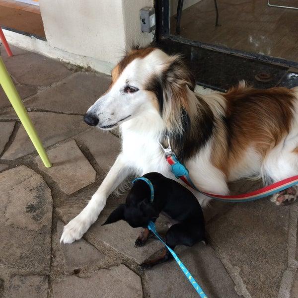 Delicia saudável Dogs sempre juntos