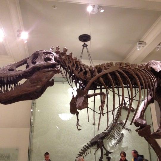 Photo taken at David H. Koch Dinosaur Wing by Larry on 11/27/2012