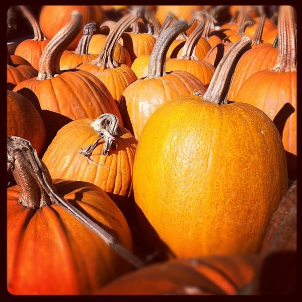 Photo taken at Clancy's Pumpkin Patch by Joshua R. on 10/29/2011