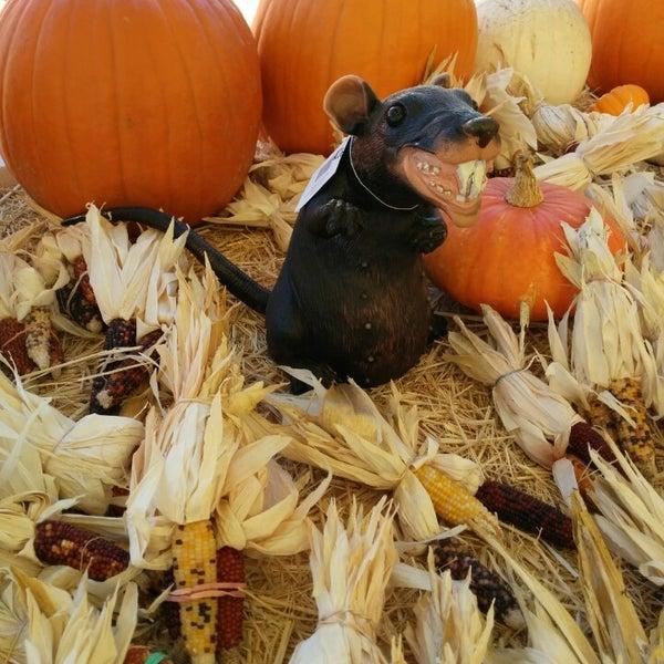 Photo taken at Clancy's Pumpkin Patch by Sean C. on 10/18/2014