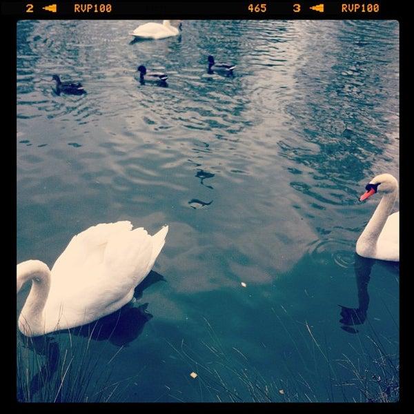 Photo taken at Lac Daumesnil by Anastasia R. on 2/24/2013