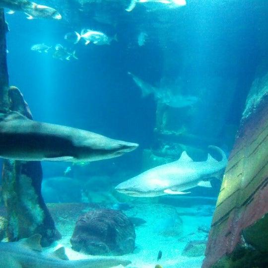 Long Island Aquarium Exhibition Center Atlantis Marine