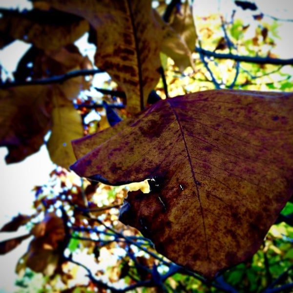 Photo taken at Planting Fields Arboretum by Elaine L. on 10/25/2014