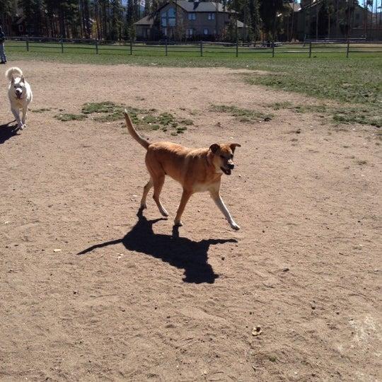 รูปภาพถ่ายที่ Carter Dog Park โดย Courtney H. เมื่อ 10/7/2012