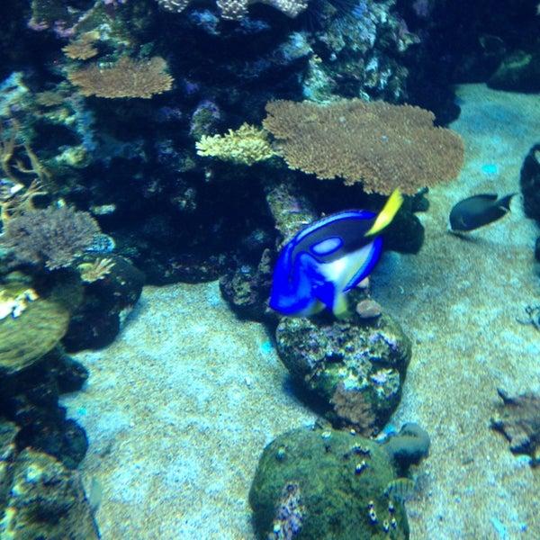 Aquarium De La R Union Rue De Port