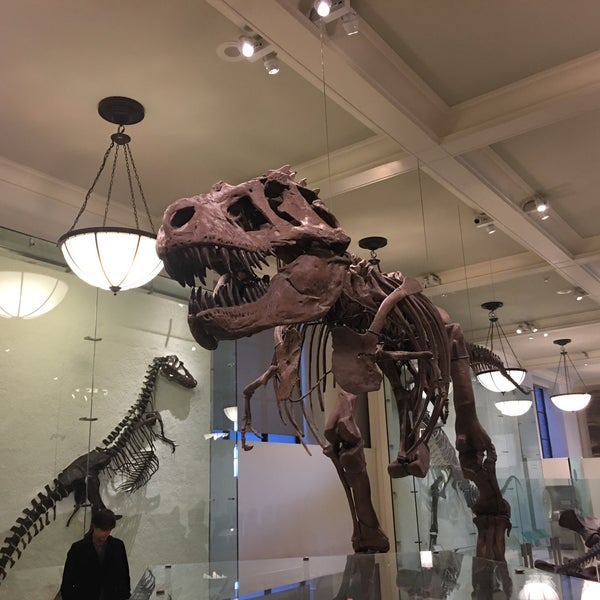 Photo taken at David H. Koch Dinosaur Wing by Amy L. on 3/4/2017