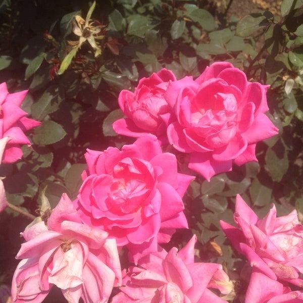 Photo taken at Cantigny Park by Alexa R. on 8/26/2013