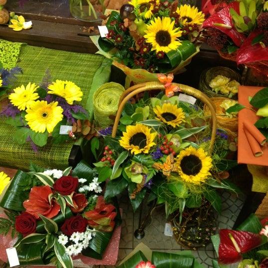 Цветы багира зеленоград