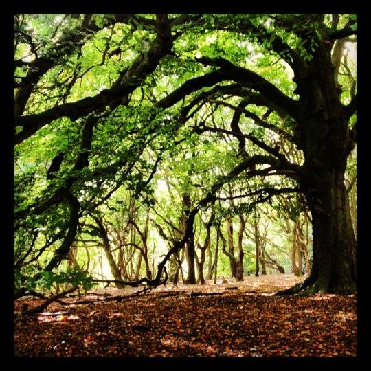 10/13/2012 tarihinde Delly B.ziyaretçi tarafından Hampstead Heath'de çekilen fotoğraf