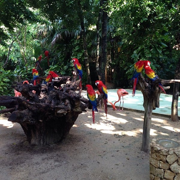 Fotos en experiencias xcaret av tulum 290 for Oficina xcaret cancun