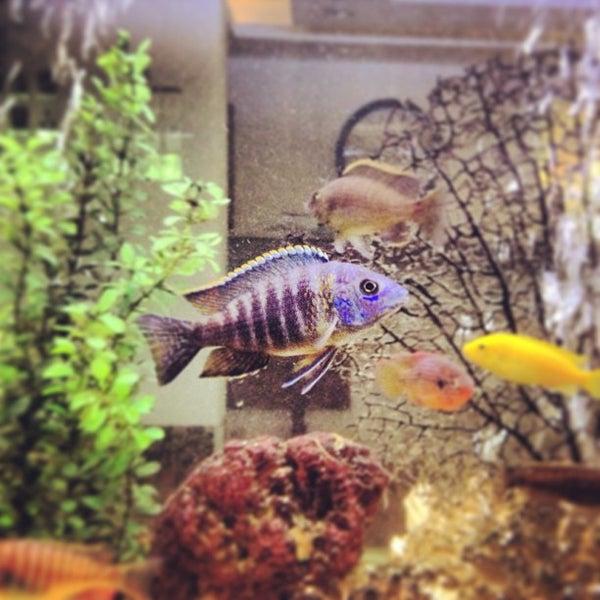 12/28/2012 tarihinde Aidar M.ziyaretçi tarafından Sea Life Resort Hotel'de çekilen fotoğraf