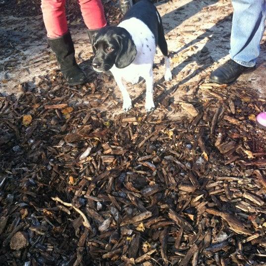 Photo taken at Cunningham Park Dog Run by Deepmalya G. on 11/18/2012