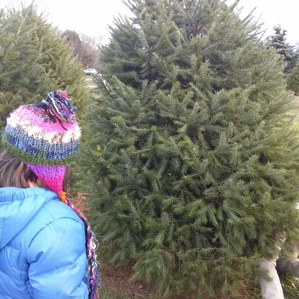 photo taken at santas christmas tree farm by angela m on