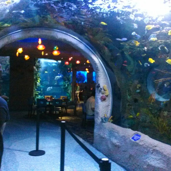 Aquarium Restaurant - 57 tips from 2915 visitors