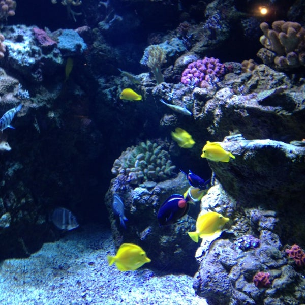 Aquarium Of The Pacific In Long Beach Parent Reviews On